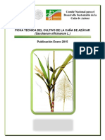 Ficha_T_cnica_Ca_a_de_Az_car.pdf