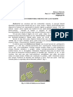Biocombustibili obtinuti din alge marine.docx