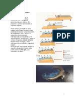 ACTIVIDADE-Vulcanismo intraplaca