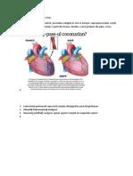 Termeni Medicali Din Anatomy Grey