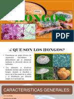 HONGOS-diapositivas-1