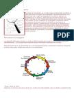 tarea 4 metodos.pdf