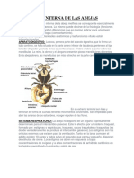 Anatomía Interna de Las Abejas