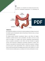 Ensayo Anatomia 2