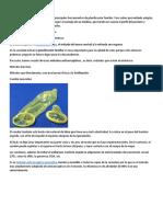 Métodos Anticonceptivos para bien.pdf