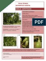 57 Vargas Ficha Sapotaceae 1555 201620