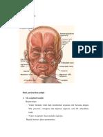 Anatomi otot wajah