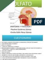 5C1 OLFATO.pdf