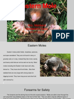 research project eastern mole