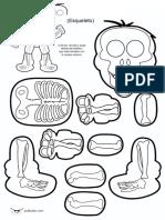 esqueleto para armar.doc