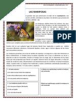 Informativo La Mariposa
