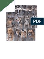 imágenes de razas de perros de peru