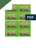 borrar conejo.docx