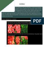 PLANTAS ORNAMENTALES (1)