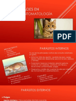 Enfermedades en Gatos y Sintomatología