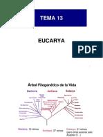BG 13 eucarya