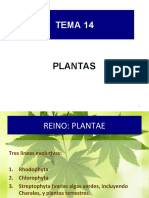 BG 14 reino plantae [3]