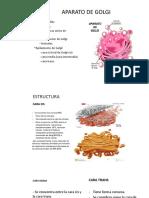 Aparato de Golgi, Estructura y Funciones