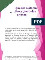 Fisiología Del Sistema Digestivo y Glándulas Anexas