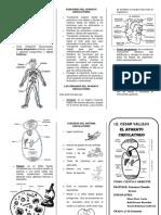 aparato circulatori