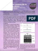 5. Polymerase Chain Reaction (Reacción en Cadena de La Polimerasa)