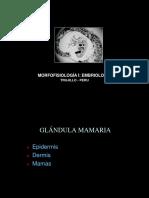 Glandula Mamaria y Estados Intersexos
