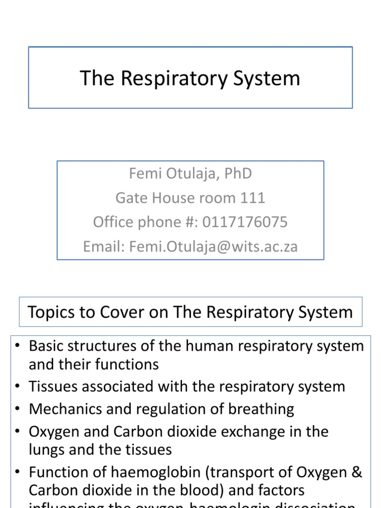 Parts Of The Respiratory System Their Functions Respiratory