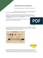 Hormonas Implicadas en El Ciclo Menstrual
