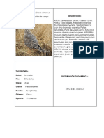Descripción de aves
