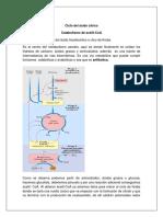 319738788-RESUMEN-CICLO-DEL-ACIDO-CITRICO-docx.docx
