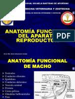 Clase 3 Anatomia Funcional Del Macho