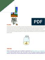 CICLO DE VIDA LAS PLANTAS.doc
