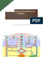 CARBOHIDRATOS - METABOLISMO