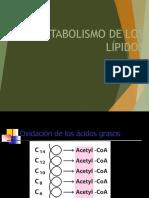 Betaoxidacion - Acidos grasos