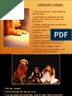 20 Sabiduria Canina.