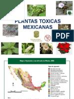 Plantas Mexicanas Toxicas.pptx