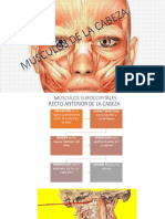 Musculosdelacabeza