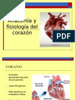 Anatomia Del Corazon y Vasos Grandes