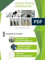Biotecnología Vegetal - Micropropagación (2)
