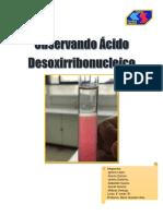 Observando Ácido Desoxirribonucleico