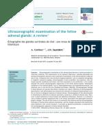 Ecografia Glandulas Adrenales en Gatos