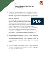 COMPARACIÓN BIOQUÍMICA Y FUNCIONAL DEL ALMIDÓN Y EL GLUCÓGENO