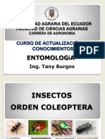 Insectos Orden Coleoptera
