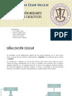 Señalización Mediante Receptores Catalíticos