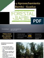 Manejo y Aprovechamiento Del Bambú - Guadua 2016 II 2