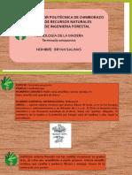 Terminalia-amazonica[1] (1)