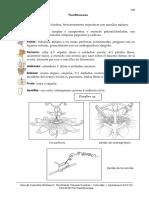 21. Passifloraceae.pdf