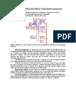 Seminario 9 Fisiología Renal y Equilibrio Ácido Base