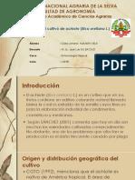 CIARA. Plagas en El Cultivo de Achiote -En Tomologia Trop