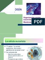Tema 9 Membrana Celular